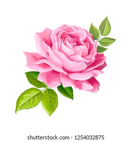 Beautiful flower of pink rose with leaves isolated on a white background. Lovely floral design element. Vector illustration