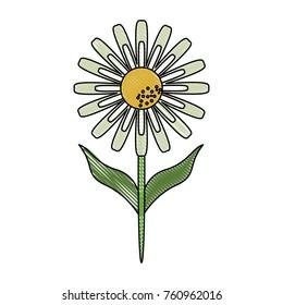 Beautiful flower plant