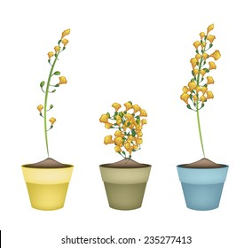Beautiful Flower, Yellow Color of Padauk Flower or Papilionoideae Flower in Ceramic Pots or Terracotta Plant Pots  for Garden Decoration.