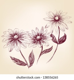 Beautiful Flowers daisies drawing vector illustration  isolated
