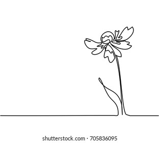 Beautiful flowers Echinacea. Continuous line drawing. Vector illustration