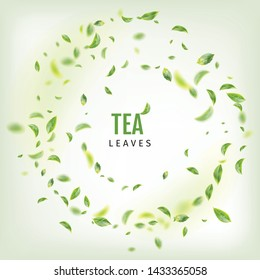 Beautiful Flying Green Tea Leaf Realistic 3d Vector Background. Tea Leaves Vortex or Tea Leaves Pattern with Place for Text