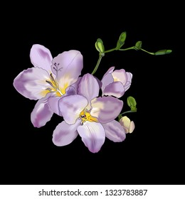 Beautiful freesia flower on black background.Purple freesia flowers in vector. Design element for wedding invitations, cards. Vintage Floral of Blooming Freesia.