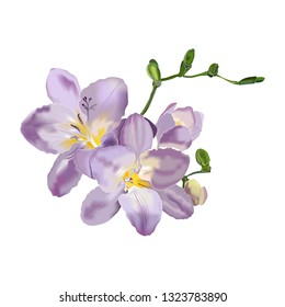 Beautiful freesia flower on white background.Purple freesia flowers in vector. Design element for wedding invitations, cards. Vintage Floral of Blooming Freesia.