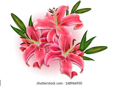 Beautiful gift card with pink lilies , may be used as a Woman's Day congratulation