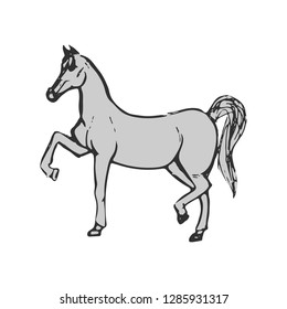 Beautiful gray horse. Purebred horse isolated on white background. Hand drawn. Flat vector illustration.
