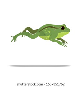 Beautiful green frog jumping somewhere. Vector character, illustration for children's design.