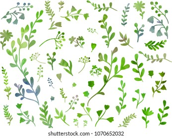 Beautiful green herbs and flowers collection. Set with floral decorative elements. Clip art illustration on white background. Watercolour imitation