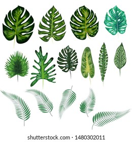 Beautiful hand drawn botanical illustration with tropical leaves