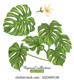 Beautiful hand drawn botanical vector illustration with tropical monstera leaves. Isolated on white background. Colorful vector illustration without transparent and gradients.