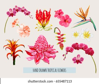 Beautiful hand drawn botanical vector illustration with tropical flowers. Isolated on white background.