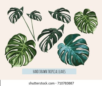 Beautiful hand drawn botanical vector illustration with tropical monstera leaves. Isolated on white background.