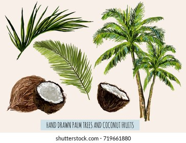 Beautiful hand drawn botanical vector illustration with palm trees, coconut fruit. Isolated on white background.