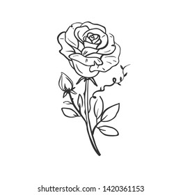 Beautiful hand drawn rose in old school style. Vector illustration of rose isolated on white. Hand drawn vector floral sketch.