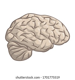 Beautiful hand drawn vector illustration with cartoon brain isolated on the white background