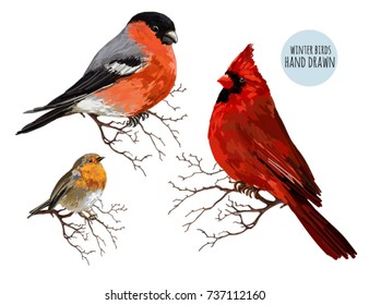 Beautiful hand drawn vector illustration with winter birds bullfinch, robin bird, red cardinal. Isolated on white background.
