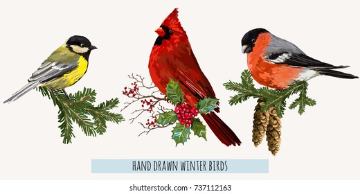 Beautiful hand drawn vector illustration composition with winter birds bullfinch,  red cardinal, blue bird. Isolated on white background.