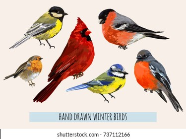 Beautiful hand drawn vector illustration with winter birds bullfinch, robin bird, red cardinal, blue bird. Isolated on white background.