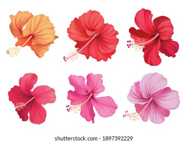Beautiful hibiscus flowers on white background. Vector set of blooming tropical floral for holiday invitations, greeting card and fashion design.