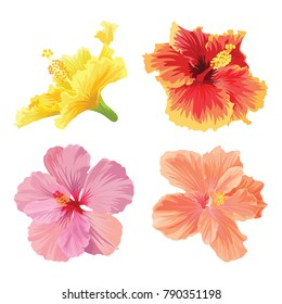 Beautiful hibiscus flowers on white background. Vector set of blooming tropical floral for wedding invitations and greeting card design.