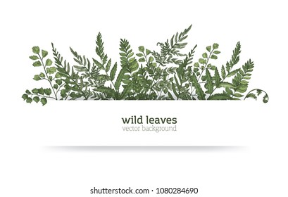 Beautiful horizontal background or banner decorated with gorgeous ferns, wild herbs or green herbaceous plants. Elegant herbal backdrop or border. Colorful realistic natural vector illustration