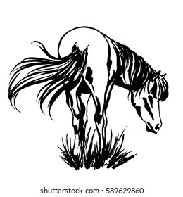 Beautiful Horse, standing in the grass with raised up long silky tail and the mane flowing down, back view, hand painted ink illustration for horse breeding farm design