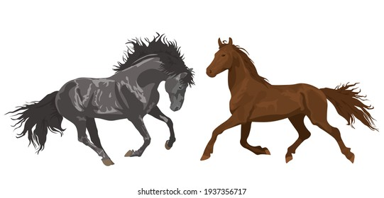 beautiful horses in various poses. Set of vector illustrations isolated on white background. Horseback Riding. farm. poster card with horses