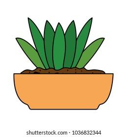 beautiful houseplant in pot