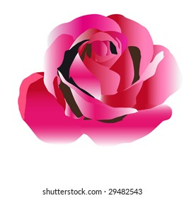 Beautiful illustration of colored roses with every slight shade with detalised pestels over white background.