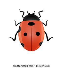 Beautiful ladybird vector