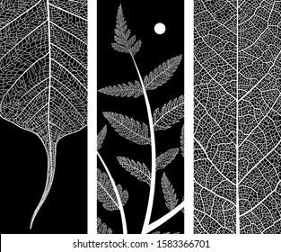Beautiful leaf backgrounds. Black and white vein elegant botanical illustration. Minimalism style. Black and white vintage modern object