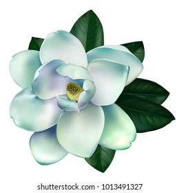 Beautiful light blue and green magnolia flower with leaves isolated on a white background. Vector.