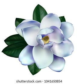 Beautiful light magnolia flower isolated on a white background. Vector.