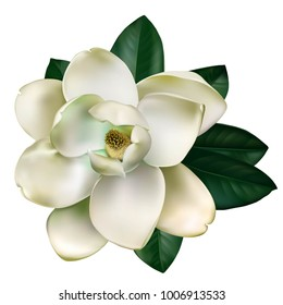 Beautiful light magnolia flower with leaves isolated on a white background. Vector.