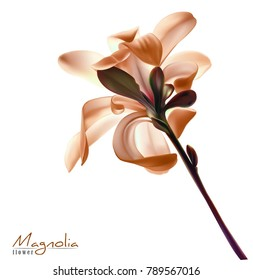 Beautiful light pink red magnolia flower isolated on a white background. Vector.