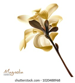 Beautiful light yellow magnolia flower isolated on a white background. Vector.