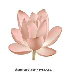 Shutterstock lotus flower album lilies picturesque www beautiful lily lotus a beautiful realistic illustration of a pastel pink lotus isolated on white jpg mightylinksfo