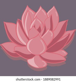 Beautiful lotus. Flower illustration. Editorial material. Pink flower. Plant on the water. Homemade succulent. Large pink flower. Illustration. Vector image of a plant.