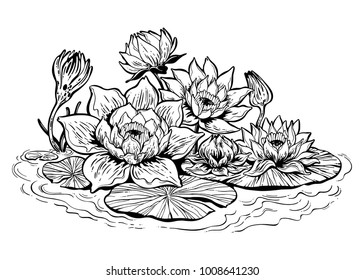A beautiful lotus lily water flower stems in bloom, Asian pond nature and botany. Romantic bohemian floral drawing. Vector isolated illustration. Invitation element. Tattoo, boho and magic symbol.
