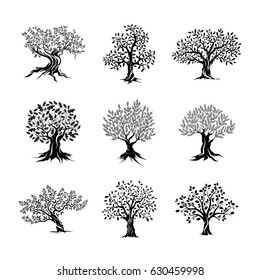 Beautiful magnificent olive and oak trees silhouette isolated on white background. Modern vector tree sign. Premium quality illustration logo design concept badge set.