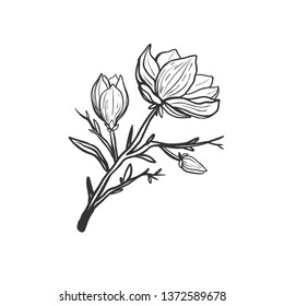 Beautiful magnolia branch with flowers isolated on white. Black and white vector illustration with hand drawn magnolia flowers in bloom.