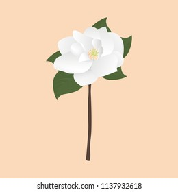 Beautiful Magnolia Flower Vector Isolated Icon Symbol Illustration