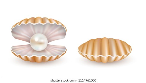 Beautiful marine pearl shell icon set. Vector realistic illustration isolated on white background.