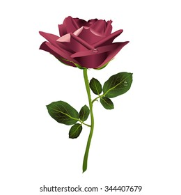 Beautiful marsala rose on a white background with drops of dew. Vector.