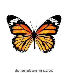 cartoon monarch butterfly images stock photos vectors shutterstock rh shutterstock com Purple Monarch Butterfly Monarch Butterfly Poisonous to Humans