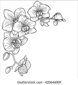 Beautiful monochrome vector floral background with orchid branches with flowers in graphic style.