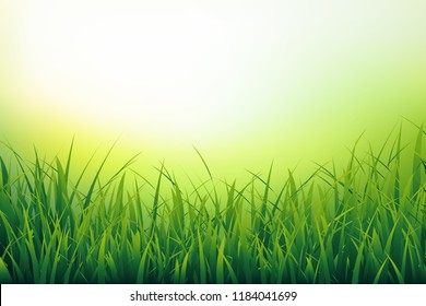 Beautiful nature background of fresh grass close-up. Green blades on blurred background. Vector illustration