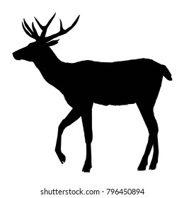 Beautiful noble proud sika deer are ruminant mammal in family Cervidae. Side view. Dark ink hand drawn picture sketchy in art retro style pen on paper with space for text