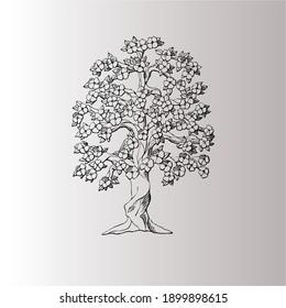 beautiful old tree vector design