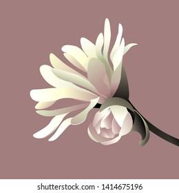 Beautiful pastel colored magnolia flower. Vector illustration